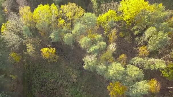 Ripresa aerea della foresta nei colori di autunno