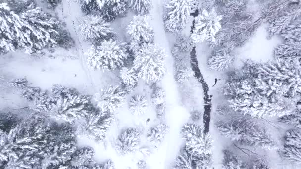 Luftaufnahme des schneebedeckten Waldes. Winterlandschaft mit schneebedeckten Hügeln.