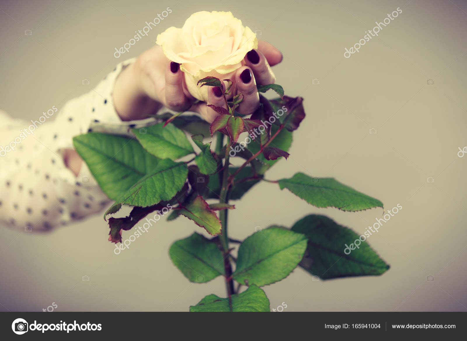 Mujer manos sostiene flor rosa blanca — Foto de stock © Anetlanda ...