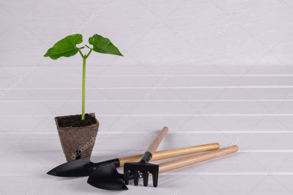 Pot with young seedling on white wooden background