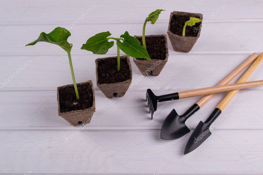 Pots with seedlings stand in a line and little garden tools
