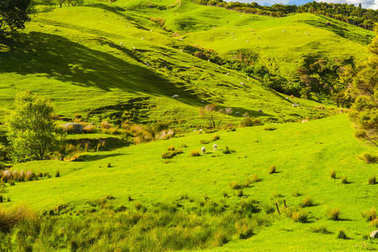 Hills of the New Zealand