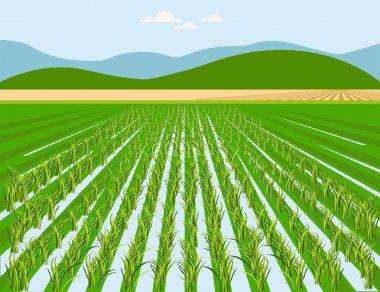 Vector rice field