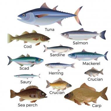 Commercial fish species.