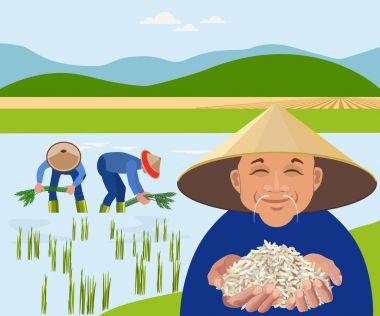 Farmers harvest rice in paddy field