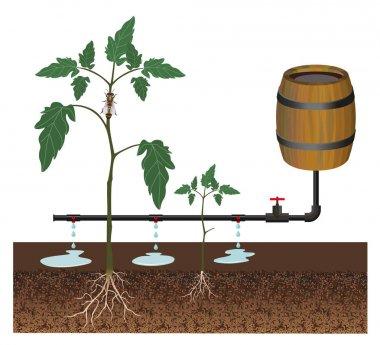 Drip irrigation vector