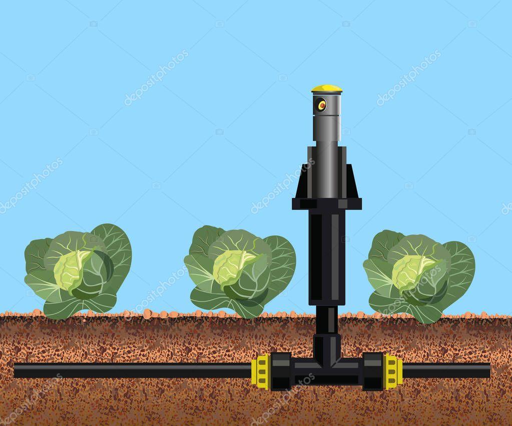 Irrigation sprinkler and cabbage field