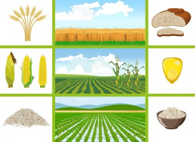 Agricultural fields - wheat, maize, rice.