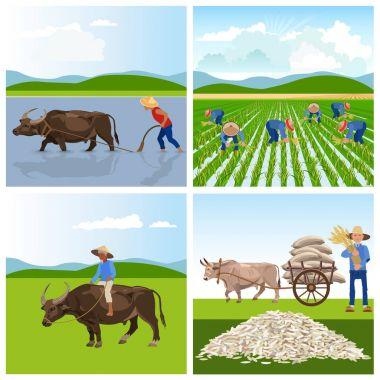 Farmers work in rice fields.