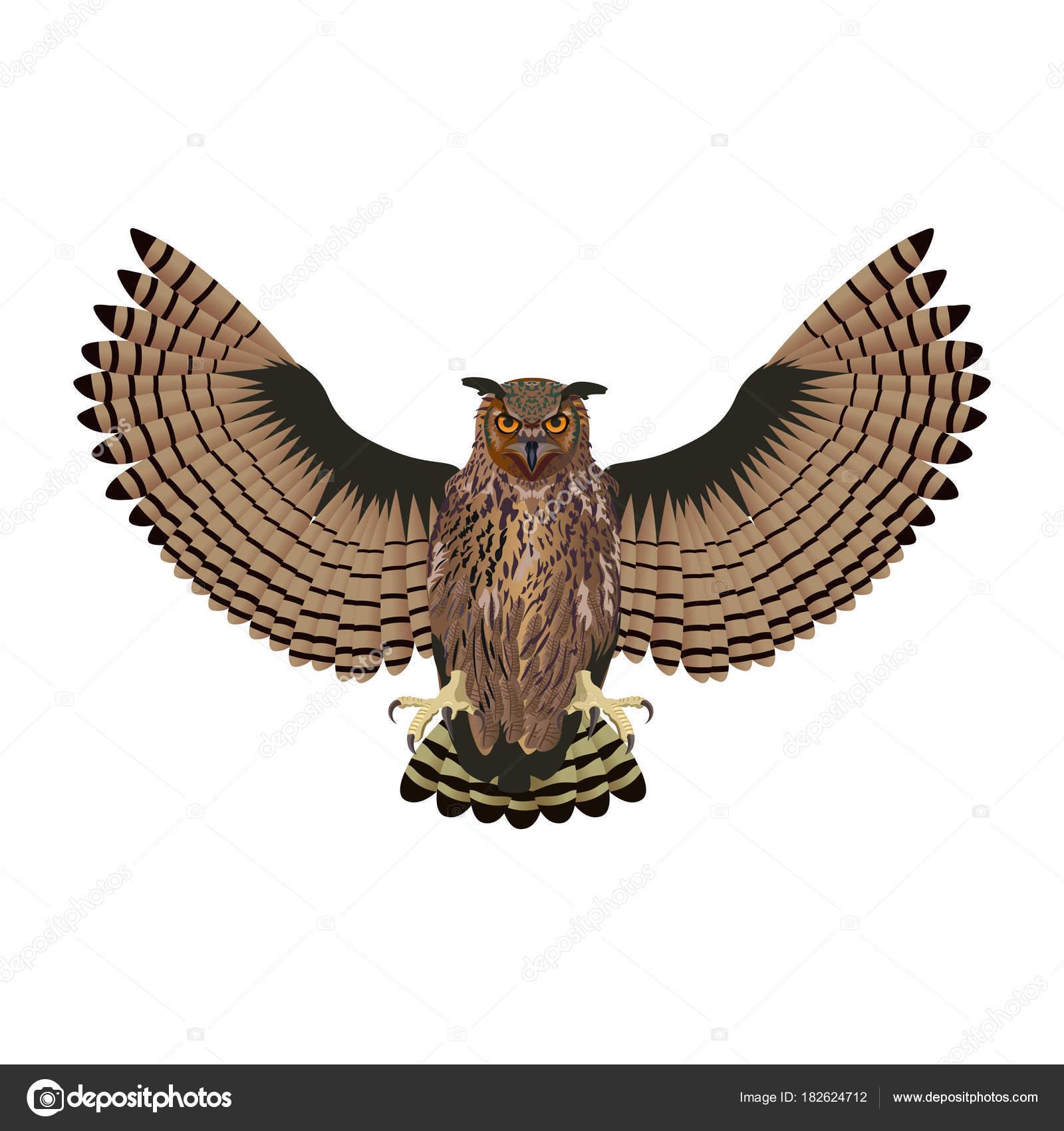 Owl With Open Wings Stock Vector Newgena 182624712