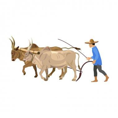 Farmer with a couple of zebu