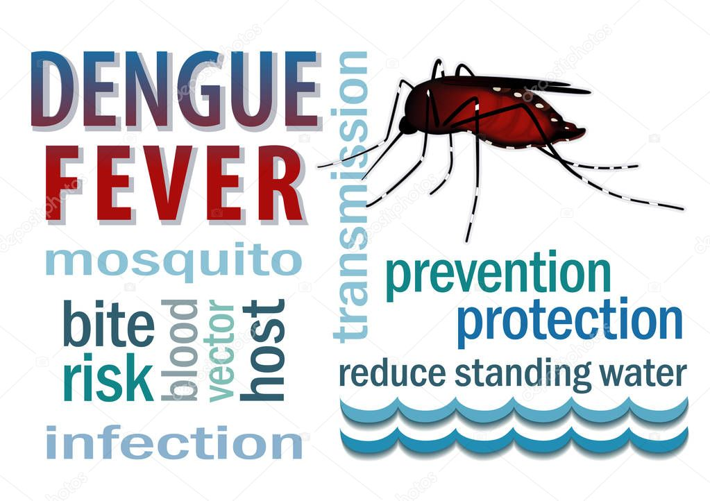 Dengue Fever, blood filled mosquito, standing water, bite, infection, prevention, protection word cloud, isolated on white background.