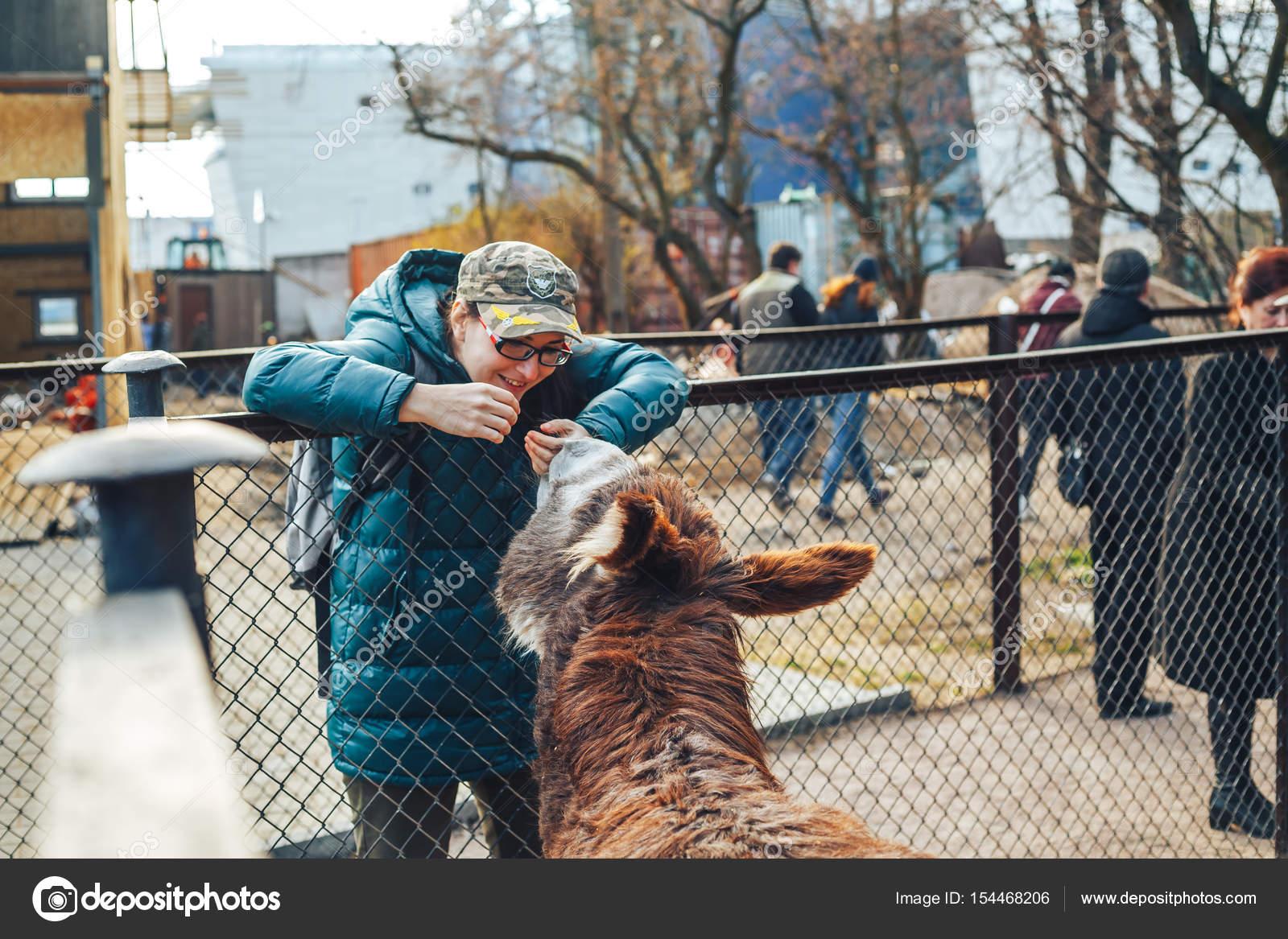 colpo di bella ragazza alimentazione asino allo zoo — Foto Stock ...