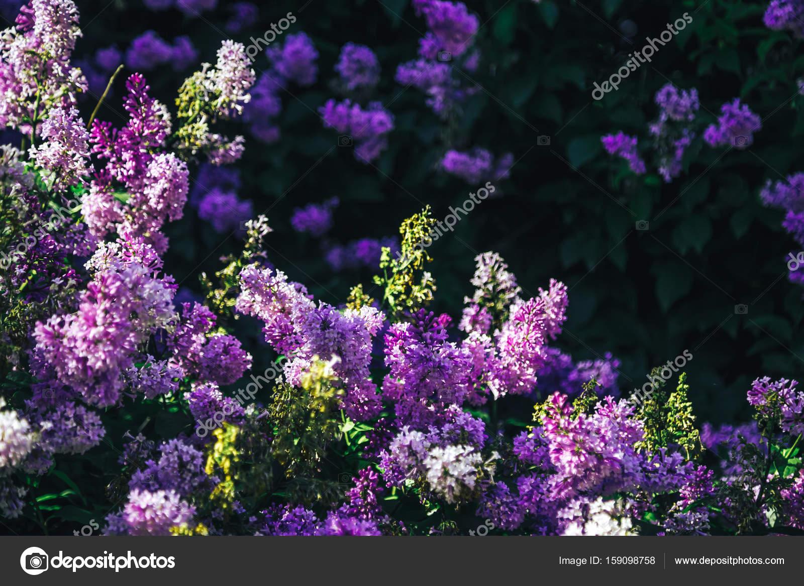 Куст с красивыми цветами фото