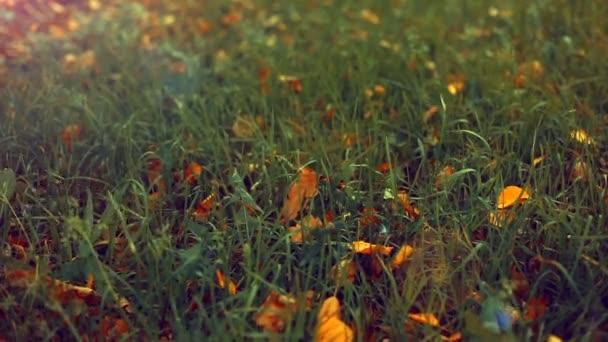 autumn garden with green grass closeup