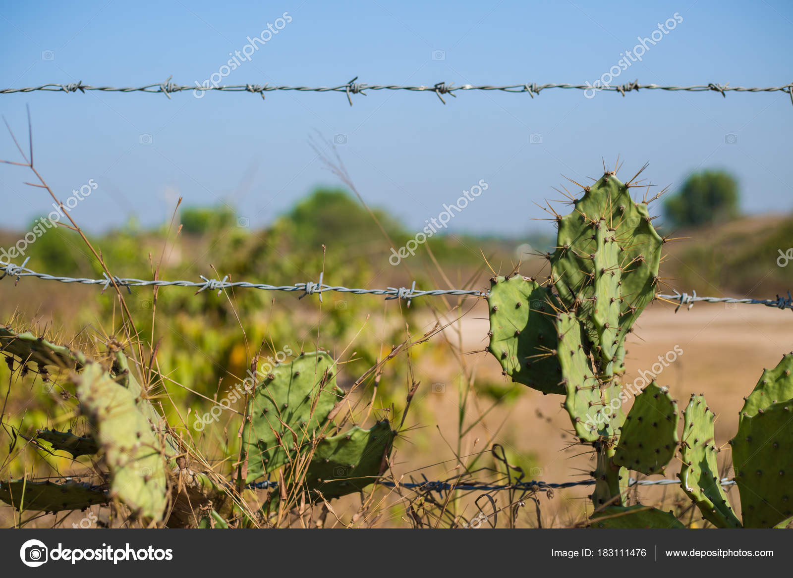 A Old Rustic Barb Wire Fence Next To Desert Cactus This Represents Control And Force With Metal Limits The Countryside Is Necessary