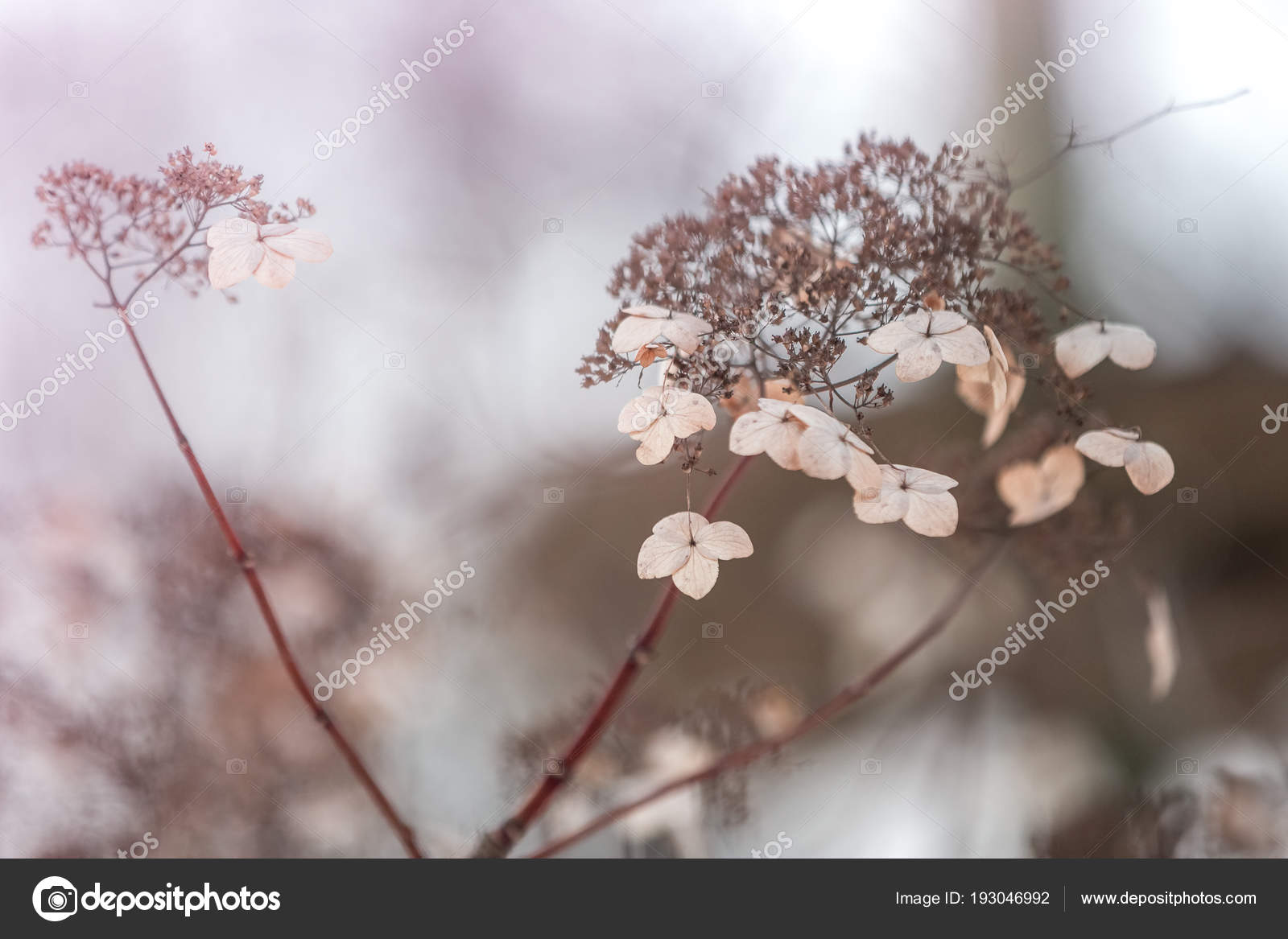 Small White Flowers Toned Gentle Soft Blue Pink Background Outdoors