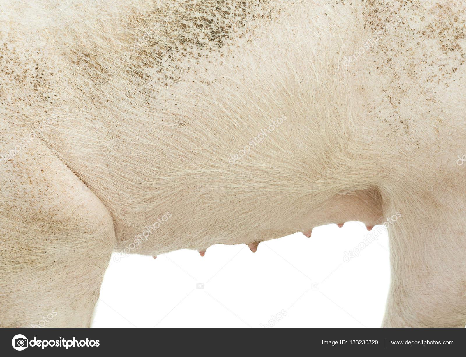 pig textured skin stock photo johny007pandp 133230320