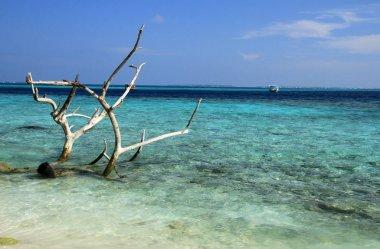 Maldivian beach, Ari Atol