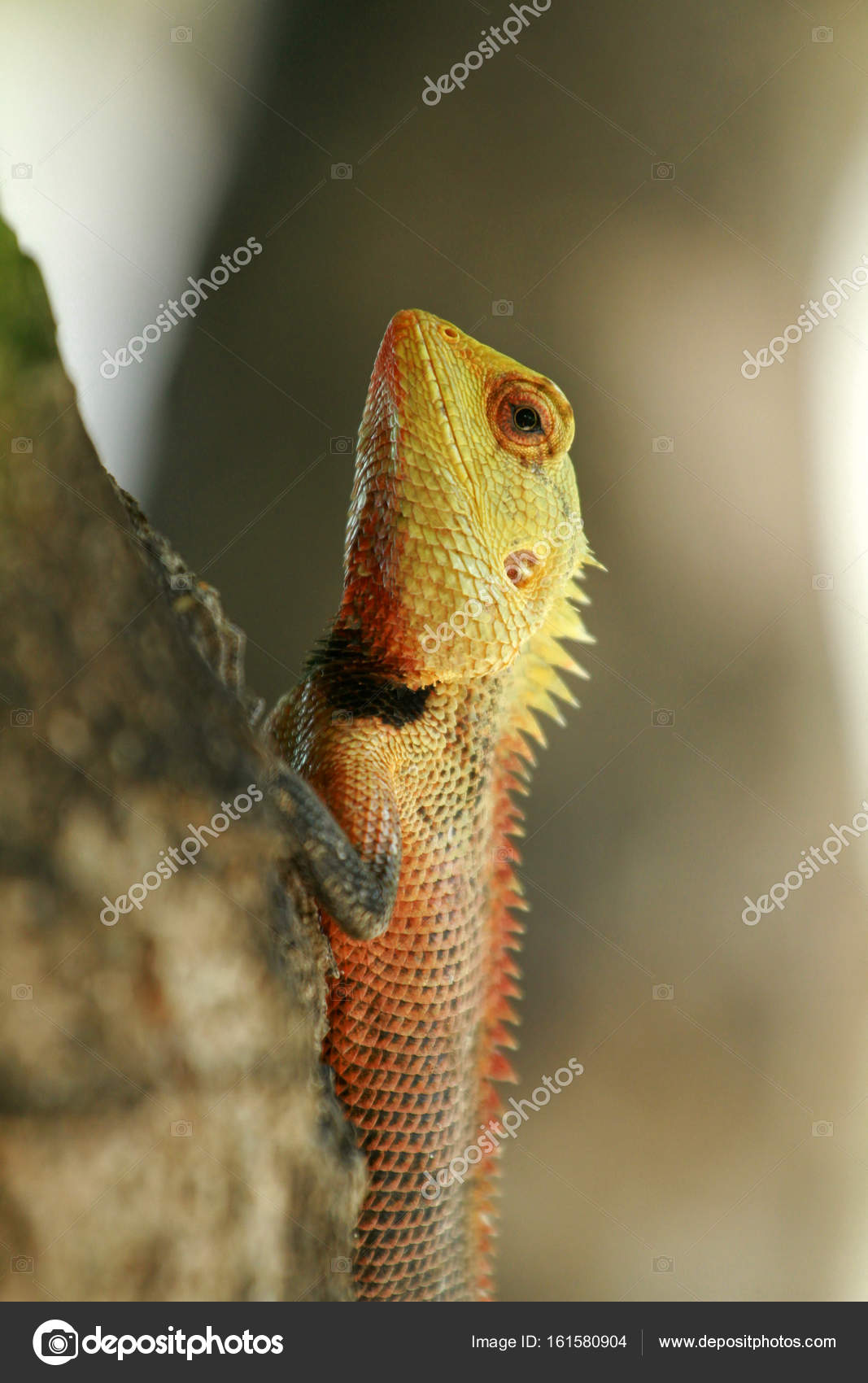 Oriental garden lizard — Stock Photo © bayazed #161580904