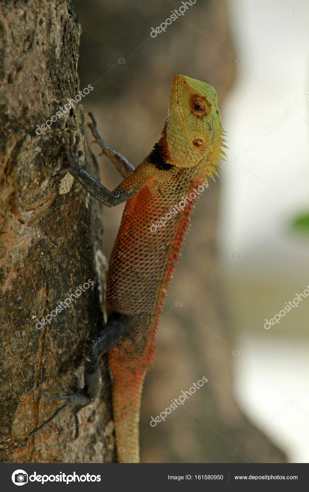 Oriental garden lizard — Stock Photo © bayazed #161580950