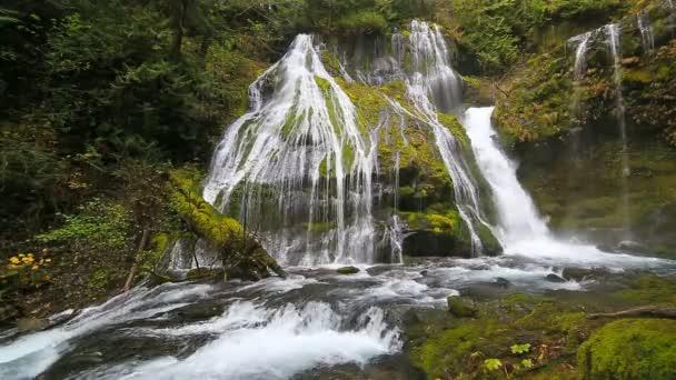 Filmů ve vysokém rozlišení z působivé Panther Creek Falls s padající vodou audio zvuky ve státě Washington 1080p hd