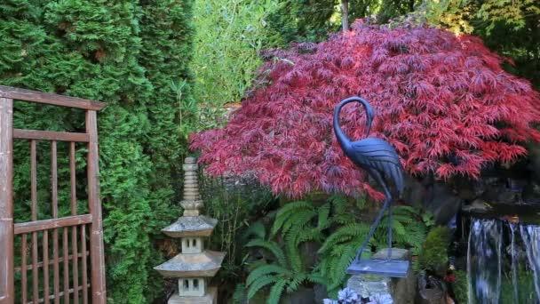 Posun filmu přichycena maple stromy nad vodní fontány v zahradě podzim 1080 p Hd