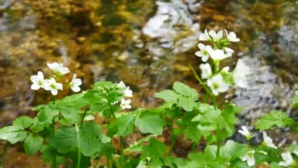Kytice na břehu potoka.