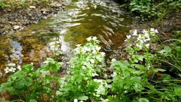 Kytice na břehu potoka. Přiblížit.