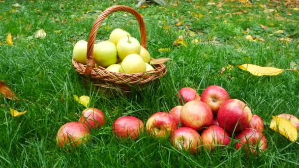 Red Apples in the Grass.
