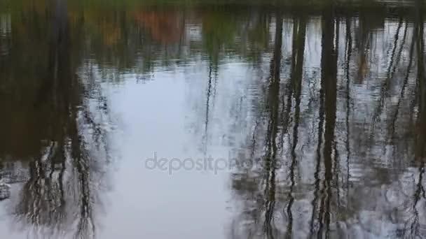 Kámen hozený do očí stromů na vodní hladině. Žádný pohyb kamery