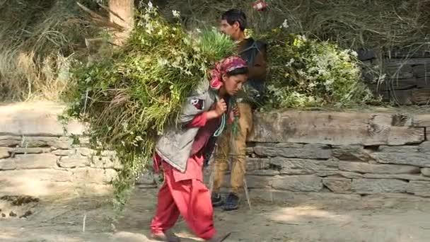 Manali, Indie - 24 září 2016: indická žena nosit obrovské stohy sena v obci