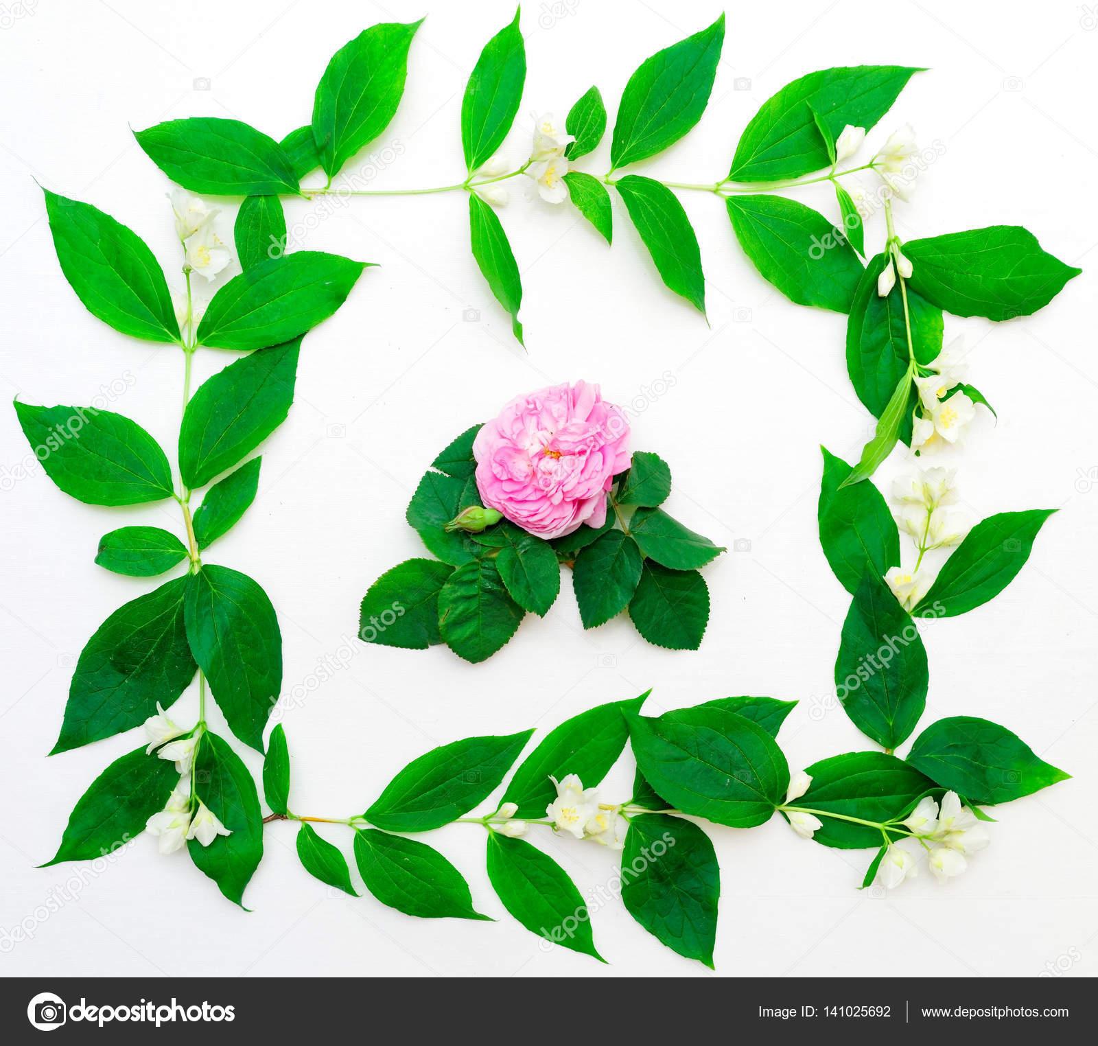 Wreath Of Pink Tea Rose And Jasmine Flowers Stock Photo Erix2005