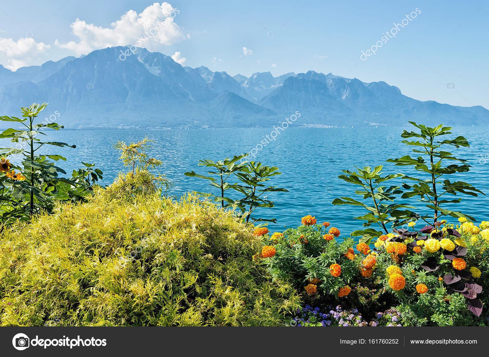 Fleur De Plantes A La Promenade Du Lac Leman A Montreux Riviera