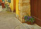 Fotografie Viola Tricolor Blumenbeet im Haus des alten Bamberg Deutschland