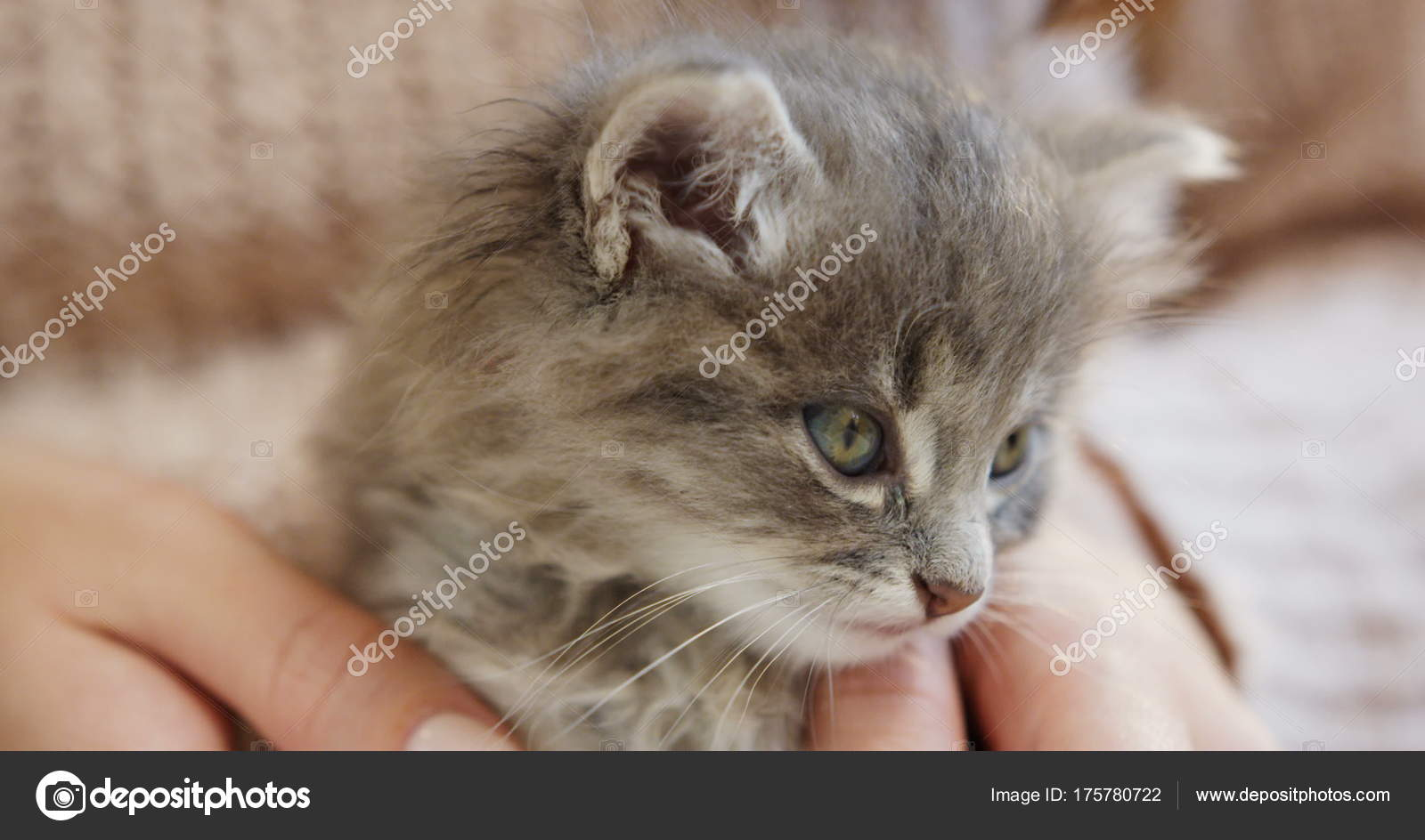 Uvnitř kočička obrázky