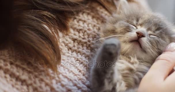 Nahaufnahme eines niedlichen kleinen Kätzchens, das in den Händen der Frauen schläft, die es streicheln. Innenräume