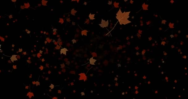 yellow, brown, red colorful leaves autumn colors falling down from top on black background