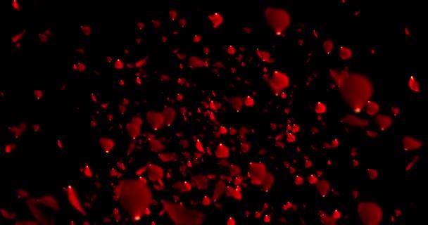 červené barevné okvětní lístky růže létající animace na černém pozadí, láska a valentine den