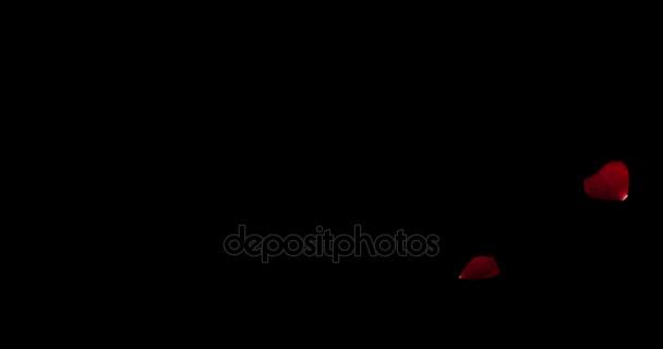 červené barevné okvětní lístky růže létající animace na černém pozadí, láska a valentine den slavnostn