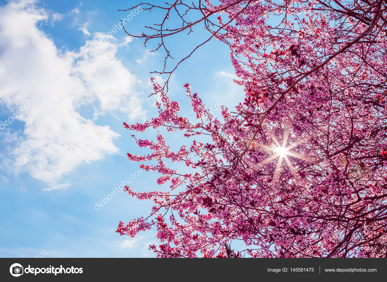 Spring tree with pink flowers almond blossom on a branch on green spring tree with pink flowers almond blossom on a branch on green background on blue sky with daily light with clouds photo by donfiore1 mightylinksfo