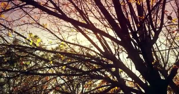lesní stromy silueta při západu slunce obloha s odlesk paprsky létající lesem na přírodní pozadí, pojem přírodní prostředí