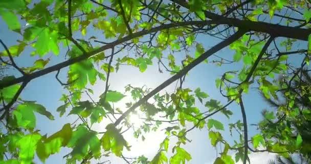 lesní stromy silueta a zelená jarní letní listy na letní oblohu s odlesk paprsky létající lesem na přírodní pozadí, pojem přírodní prostředí