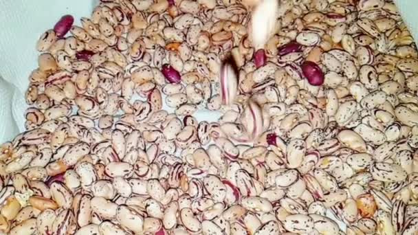 close-up of fresh dry borlotti beans fall into the basket slow motion, concept of nutrition and health care
