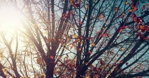 lesní stromy silueta a barevné žluté a červené podzimní listy na letní oblohu s odlesk paprsky létající lesem na přírodní pozadí, pojem přírodní prostředí