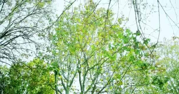 lesní stromy a zelené jaro letní listí na