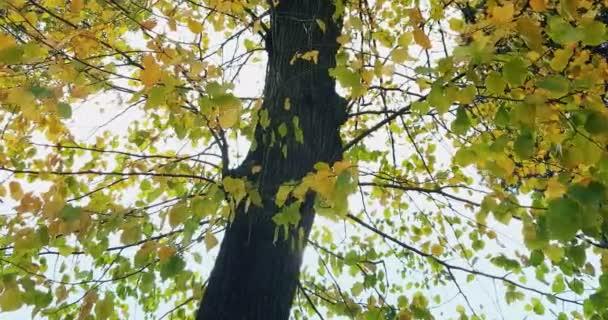 lesní stromy siluety a barevné žluté a rudé podzimní listí na denním nebi s paprsky slunečních paprsků letící lesem na