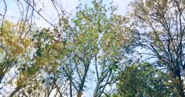 lesní stromy zelené jaro léto odjíždí v