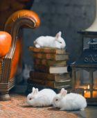 Fotografia Coniglio bianco che si siede sulla pila di libri