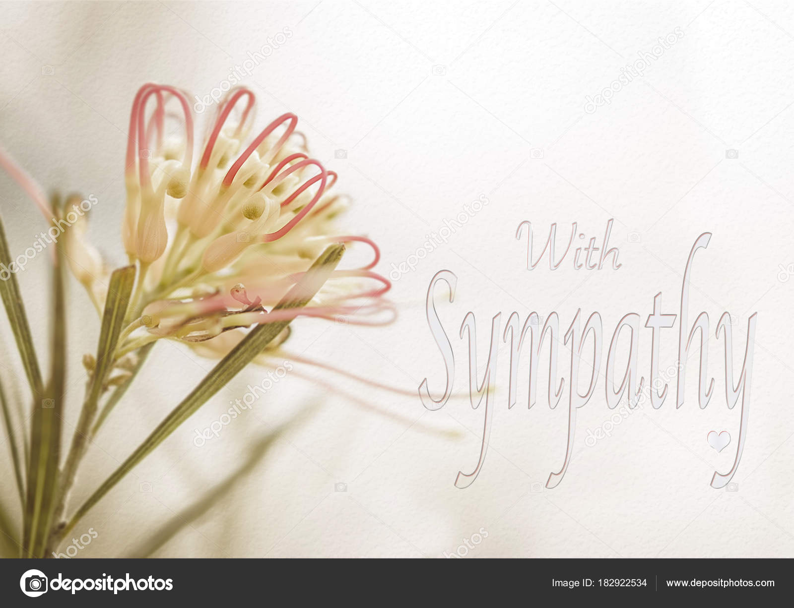 australian grevillea sympathy card stock photo